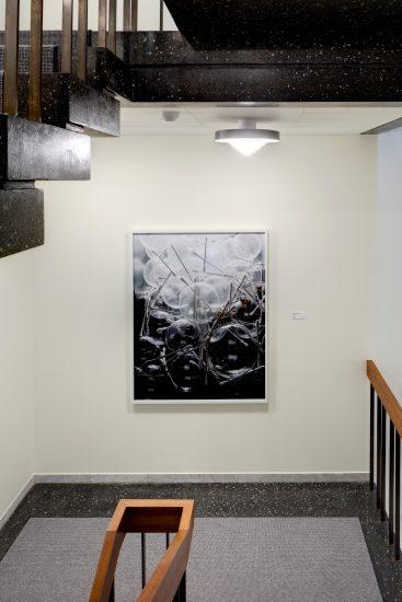 <em>Shadow Work no.2</em>, Torbjørn Rødland. Fotograf: Jussi Tiainen