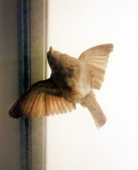 <em>The evergreen sparrow</em>, Sofie Persvik. Photographer: KORO/Cathrine Wang