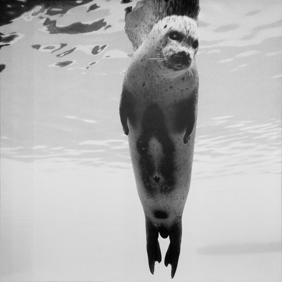<em>Seal</em>, Per Maning. Fotograf: Amanendra Shrestha