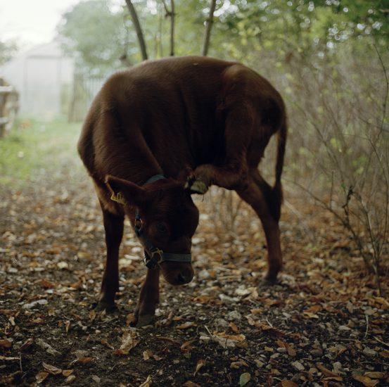 <em>The ideal state (Still getting milk from his mother)</em>, Una Hunderi. Fotograf: Una Hunderi