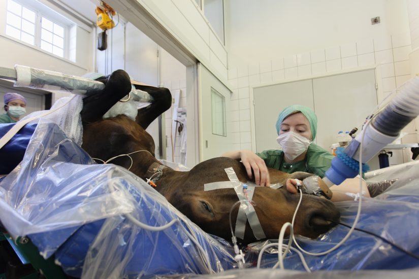 <em>Operasjon av hest, Campus Adamstuen.</em>, Bildet er tatt som profilbilde for SportFaMed , NMBU. Fotograf: Lillian Andersen/NMBU