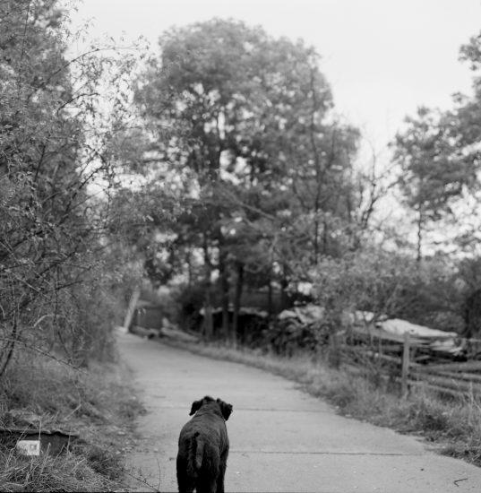 <em>The ideal state (Free to wander)</em>, Una Hunderi. Fotograf: Una Hunderi