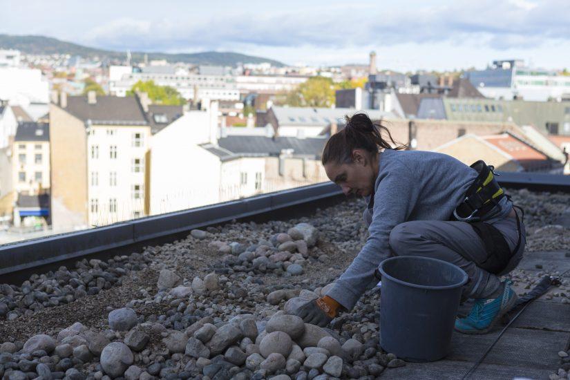 <em>Kunstner Elin T. Sørensen i arbeid med steinhagen utenfor vinduene til Utlendingsnemndas venterom</em>, . Fotograf: Alex Asensi