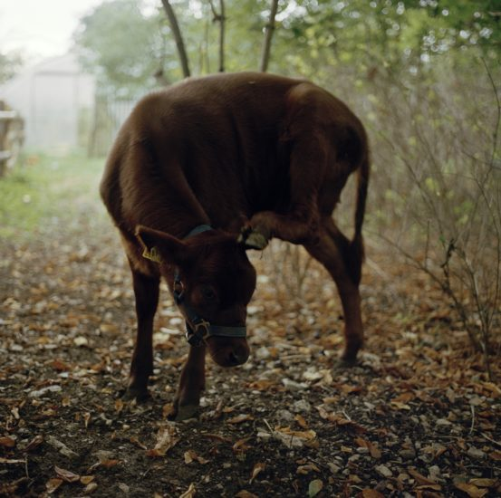 <em>The ideal state (Still getting milk from his mother)</em>, Una Hunderi. Photographer: Una Hunderi