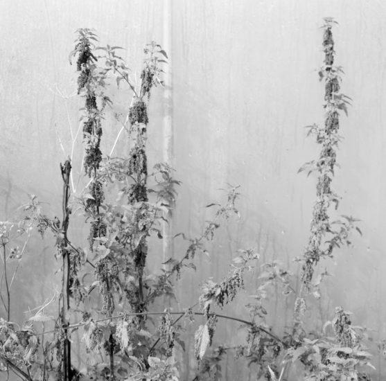 <em>The ideal state (Keeping the weeds stops erosion)</em>, Una Hunderi. Photographer: Una Hunderi