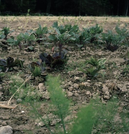 <em>The ideal state (Seeding and tending)</em>, Una Hunderi. Photographer: Una Hunderi