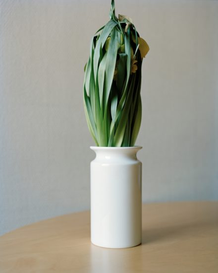 <em>Restricted Flora (1)</em>, Ingrid Eggen. Fotograf: Eggen Ingrid